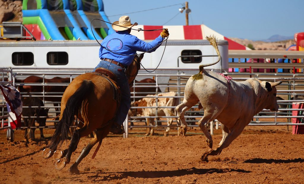 texas, rodeo, cattle ranch, lasso