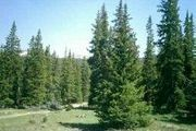 31.7 Acres Approx 3 Mi From Tincup