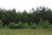 36+/- Acres Hwy. 77 Rent to Own