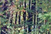 51 Dogwood Ln.
