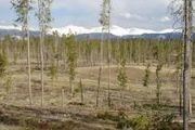 44 Elk Meadows