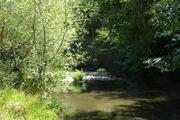 49448 Hollow Tree Creek Rd.