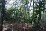 Indian Woods/Island Woods