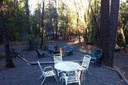 75 Oak Tree