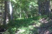 Trails Rd.